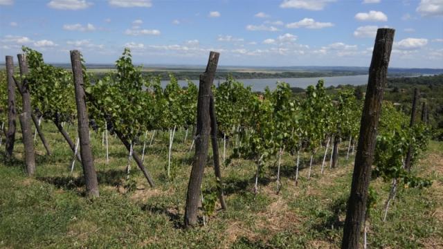 Uz organsku proizvodnju grožđa, visok kvalitet, ali i cena vina