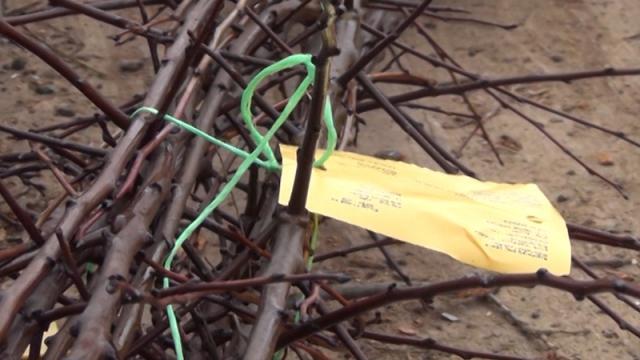 Javni poziv za dodelu sadnica maline, jagode ili borovnice