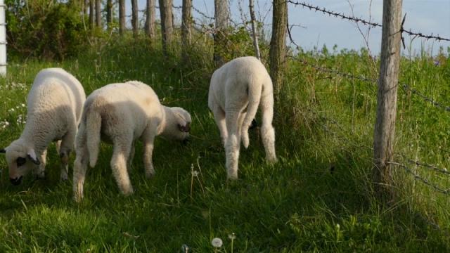 Zbog niskih cena, uzgajivači rasprodaju stada