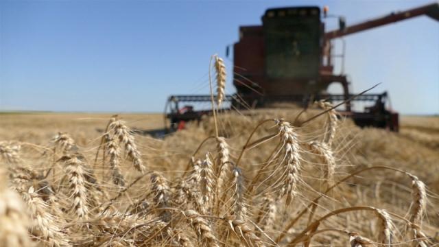 Nisu ispunjena očekivanja o preuzimanju planiranih količina pšenice