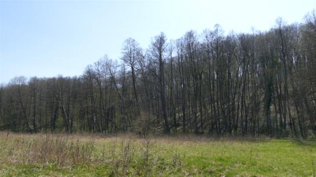 Uspostavljanje ekološke mreže