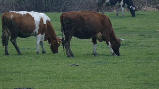 Suša i zastareli propisi najveći problem za održavanje pašnjaka
