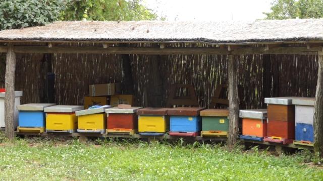 Pčelarima trebaju menadžeri