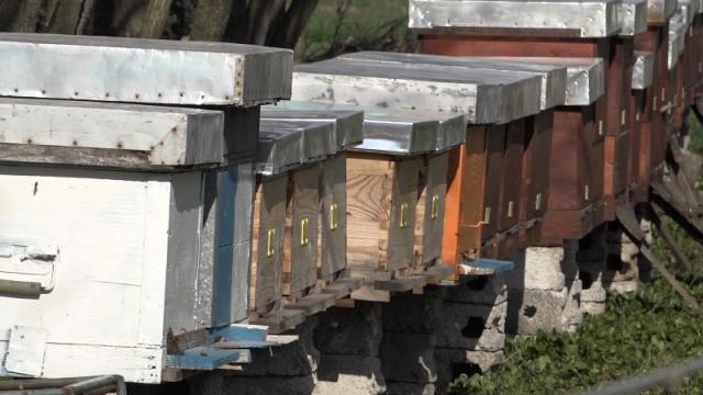 Više od 6.500 košnica u žagubičkim selima