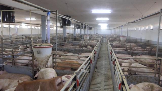 Važna mera prevencije biosigurnost na farmama