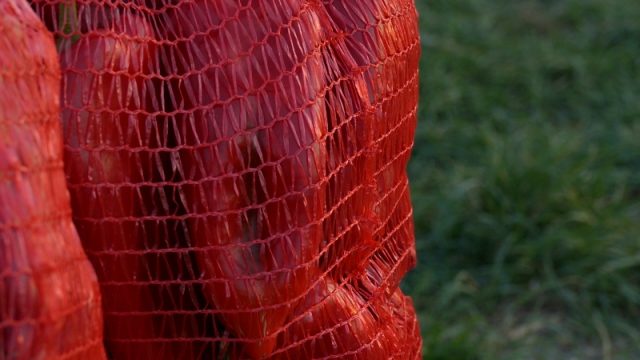 Planiraju proizvodnju više od 460 tona začinske aleve paprike