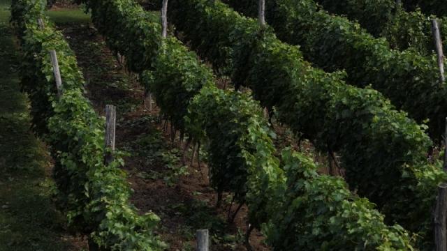 Zadruga za spas vinogradarstva