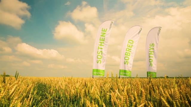 Tri vrhunske sorte pšenice