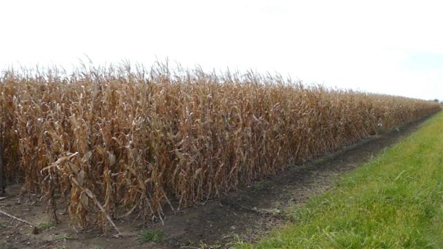 Samo puna i pravilna agrotehnika garantuju sigurne prinose
