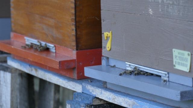 Stradalo 1668 pčelinjih društava