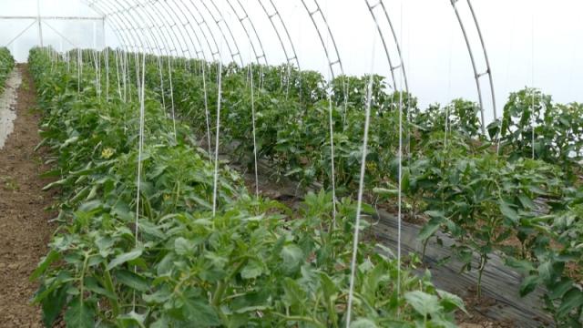 Aktuelne vremenske prilike ne pogoduju poljoprivredi