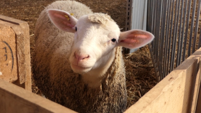 Kroz ovčarstvo valorizuju ratarsku proizvodnju