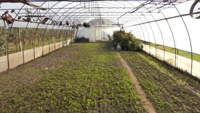 """""""Zeleni marketing""""  - dugoročno zdravlje  i očuvanje životne sredine"""
