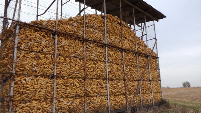 U padu cena kukuruza roda 2018.