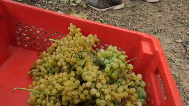 Pomoć države u plasmanu i promociji srpskih vina