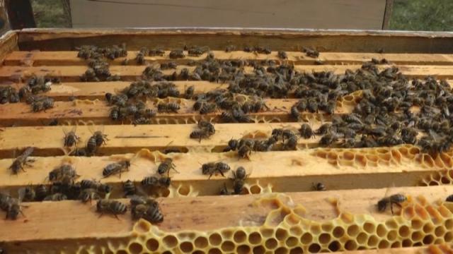 Srbija prepoznala pčelarstvo kao perspektivu
