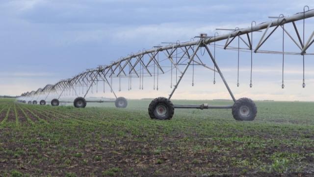 Neophodno unapređenje navodnjavanja i kvaliteta žitarica
