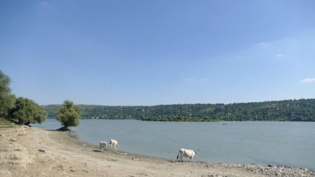 Sve učestaliji nezakonit izlov  na Dunavu