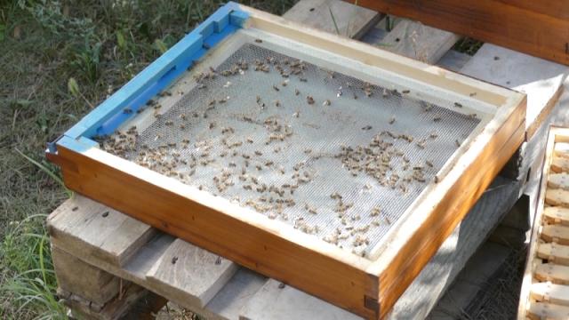 Definisanje aktivnosti u borbi protiv trovanja pčela