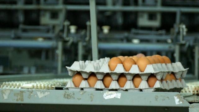 Rok trajanja jaja stavlja se u trenutku pakovanja