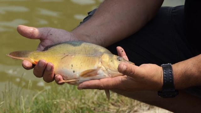Novi ribnjaci u Vojvodini na oko trideset hektara