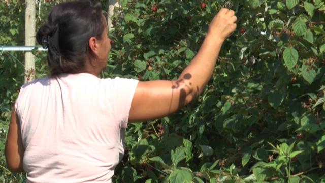 Žene su neformalna radna snaga na selu