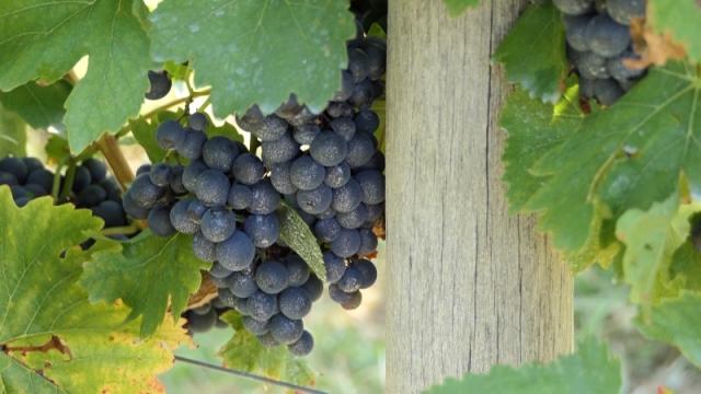 Zvanični sajt Centra za vinogradarstvo i vinarstvo