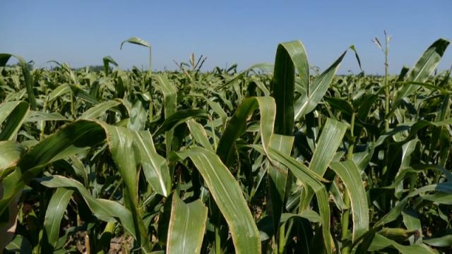 Na spisku oko 20 poljoprivrednih proizvoda