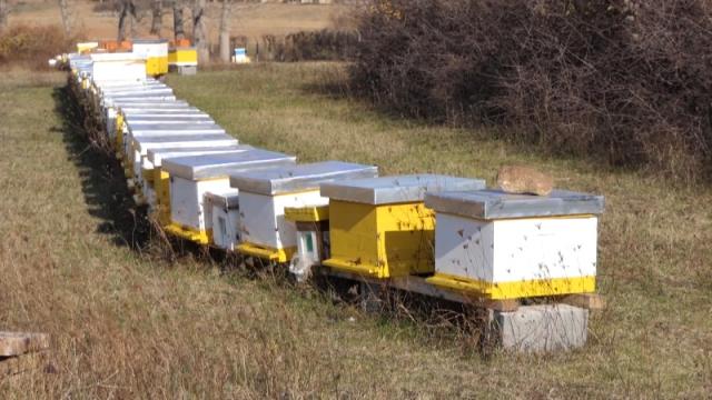 Amitraz ograničava izvoz meda
