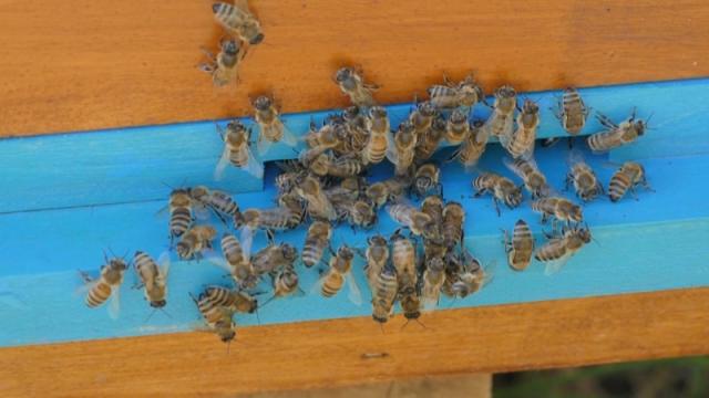 Trovanje pčela najviše se dešava u Vojvodini