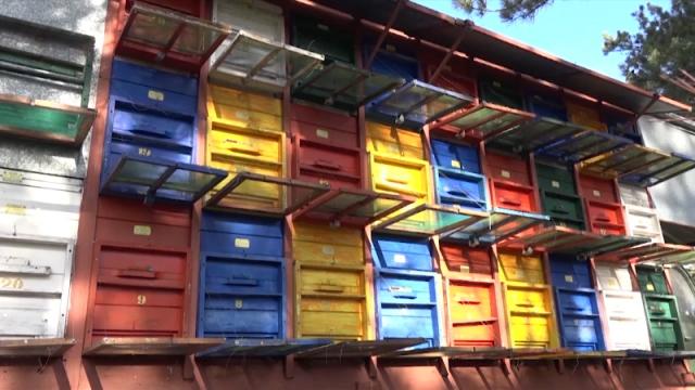 Pčelari zabrinuti što nema prave zime