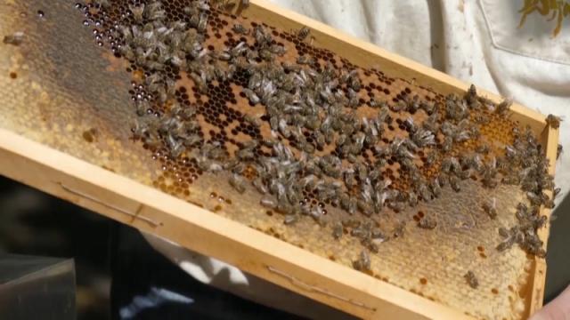 Onlajn peticija za očuvanje pčela