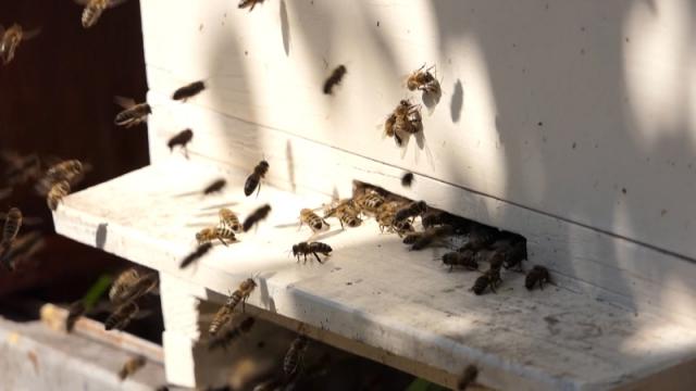 Grupacija za unapređenje pčelarske proizvodnje