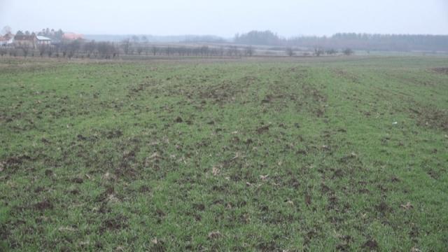 Zapušteno državno zemljište biće dato na besplatno korišćenje