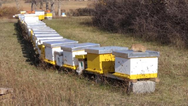 Konkurs za podršku pčelarima traje do 28. februara