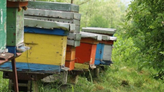 Predložili da subvencija po košnici u organskom pčelarstvu bude 2.400 dinara