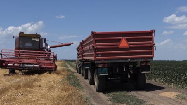 Kvalitet domaće pšenice pokvarila kiša u maju
