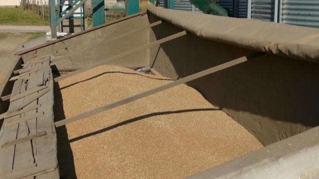 Još nije počeo masovniji uvoz pšenice
