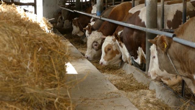 Ne postoji zakonska regulativa koja bi zabranjivala uvoz lošeg genetskog materijala
