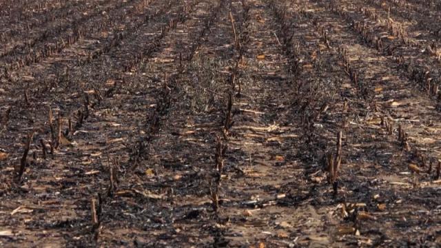 Brojni faktori narušavaju prisustvo mikroorganizama u zemljištu