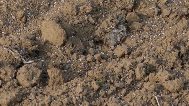 Kukuruz će zauzeti polovinu površina u prolećnoj setvi