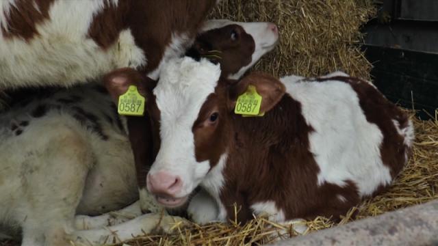 Uz podršku isplativo bavljenje stočarstvom