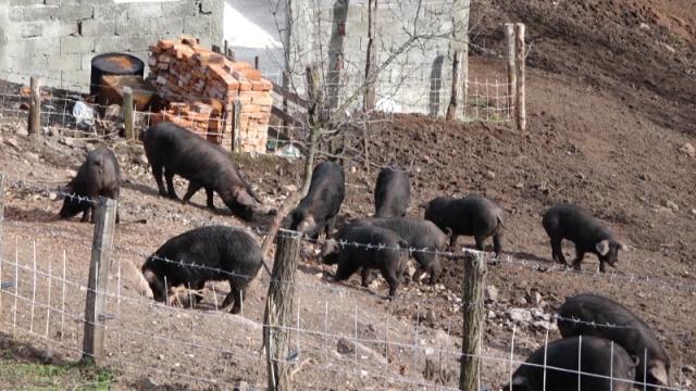 Očekuje se povećanje količine sakupljenih sporednih proizvoda životinjskog porekla