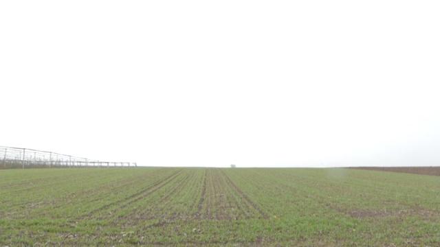 Vremenski uslovi dobri za pšenicu