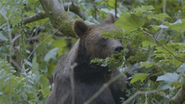 Ilegalna trgovina divljim vrstama godišnje vredi i do 10 milijardi dolara