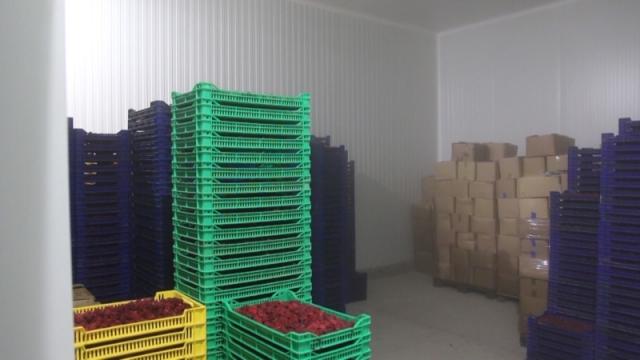 Objavljena prognoza cena deset poljoprivrednih proizvoda