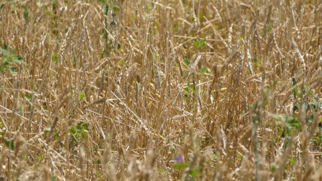 Preporučuju da poljoprivrednici sami fotografišu njive i oštećenja
