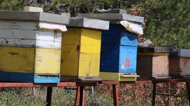 Početak vegetacije pčelarima donosi velike brige