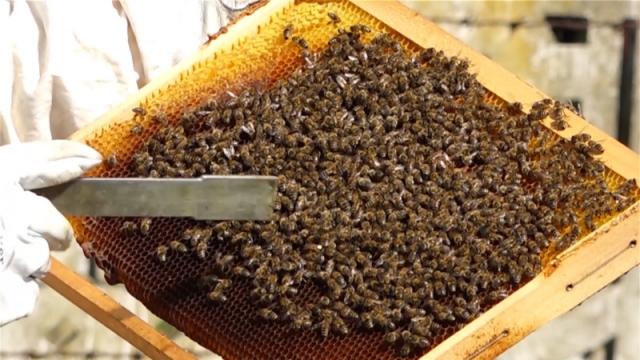 Pčelarima strajim od 65 godina dozvoljen odlazak do pčelinjaka