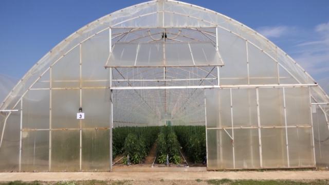 Biološka proizvodnja za zdravije povrće